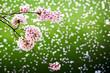 Cherry blossoms over fallen petals on the Tidal Basin