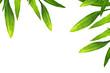 Fototapeten,japanese,bambus,natur,hintergrund