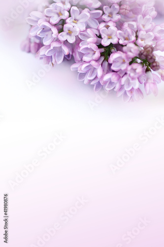 Foto op Canvas Lilac Beautiful, romantic background with lilac flowers
