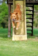 dog slipping down a slide