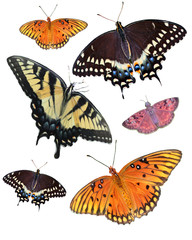 Six Isolated Butterfly's