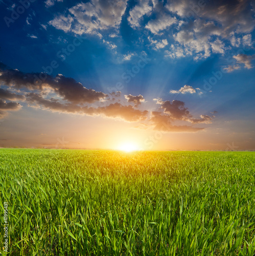 sunset over field in steppe