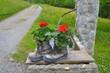 Alte Wanderschuhe mit Blumen