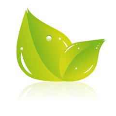 Deux grandes feuilles écologiques