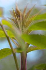 Young leaves.