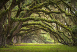 Fototapety Oaks Avenue Charleston SC plantation Live Oak trees forest