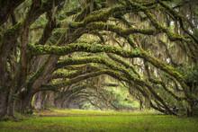 Oaks Avenue Charleston SC plantation d'arbres forestiers Live Oak