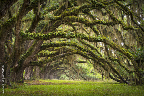 Fotobehang Platteland Oaks Avenue Charleston SC plantation Live Oak trees forest