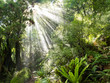 Rays of sunlight beam trough dense tropical jungle