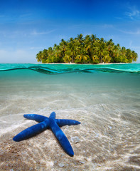Underwater life near beautiful island