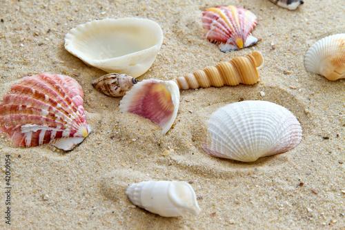 Strandmuscheln