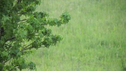 Wetter - 001 - Regen - Baum