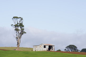 Farm shed and eucalyptus, Tasmania, Australia