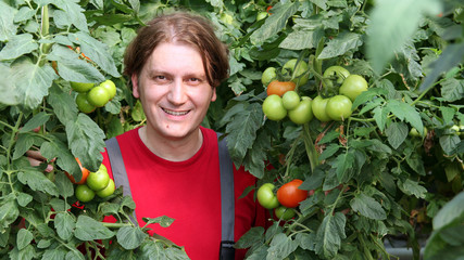 Smiling Worker Picking Tomatos