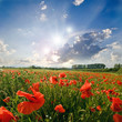 Spring landscape with green grass, poppies and clouds
