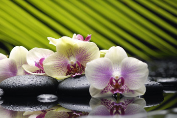 Beautiful branch orchid with palm leaf on pebbles