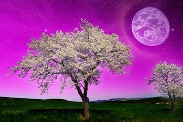 Fantasy night landscape