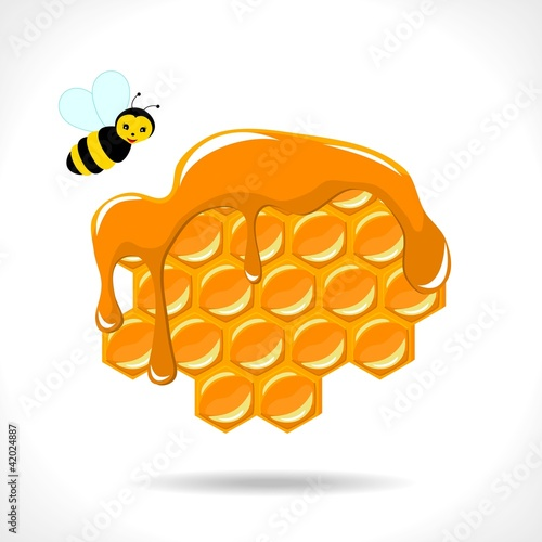 honeycomb with a bee