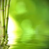 Fototapety troncos de bambú verde sobre el agua