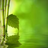 Fototapety bambú con hoja verde frente al agua