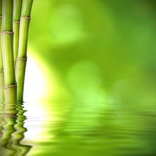 verts troncs de bambou sur l'eau