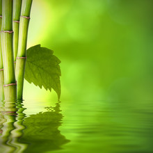 Bord de l'eau en bambou avec feuille verte
