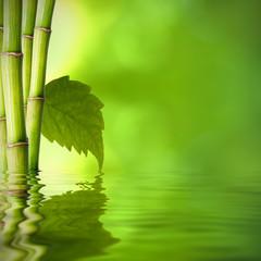 bambú con hoja verde frente al agua
