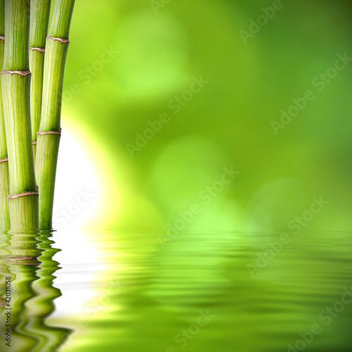 Foto Spatwand Bamboe troncos de bambú verde sobre el agua