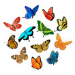 Flying  butterflies - 42031414