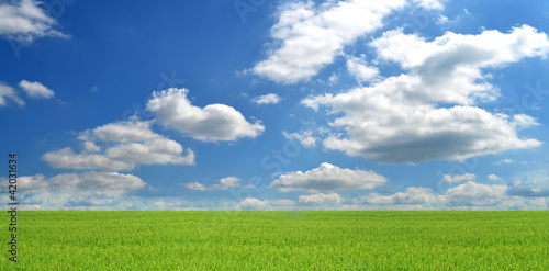 Summer landscape, countryside background