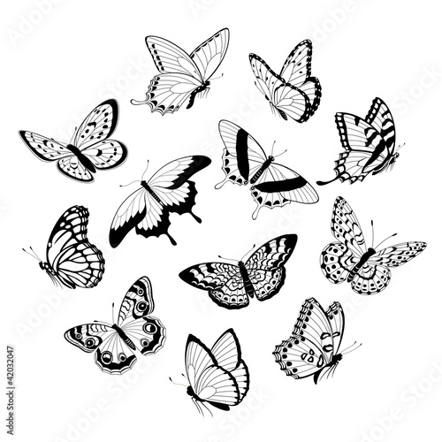 Flying black & white butterflies