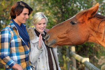 a couple and a horse asking for caress