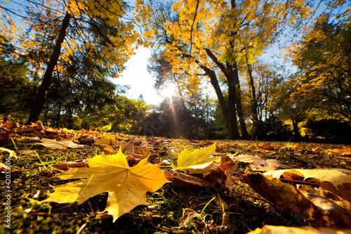 Jesień park jesień. Spadające liście w słoneczny dzień
