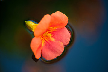 fiori 1474