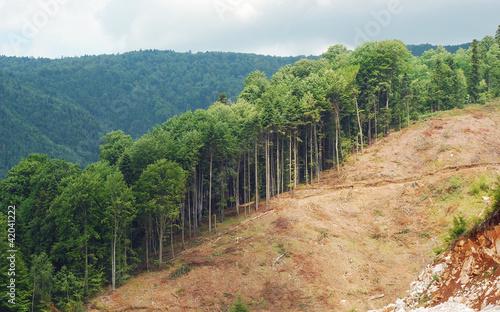 Leinwandbild Motiv deforestation