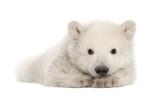 Fototapete Liegend auf dem bauch - Weiß - Säugetiere
