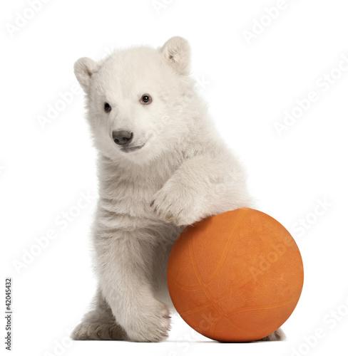Fototapeten Eisbar Polar bear cub, Ursus maritimus, 3 months old