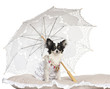 Chihuahua, 7 months old, sitting under parasol