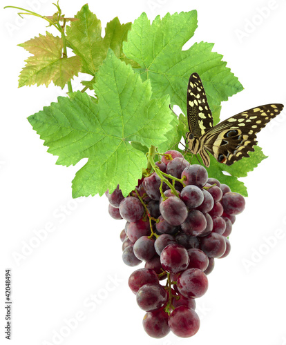 papillon sur grappe de raisin