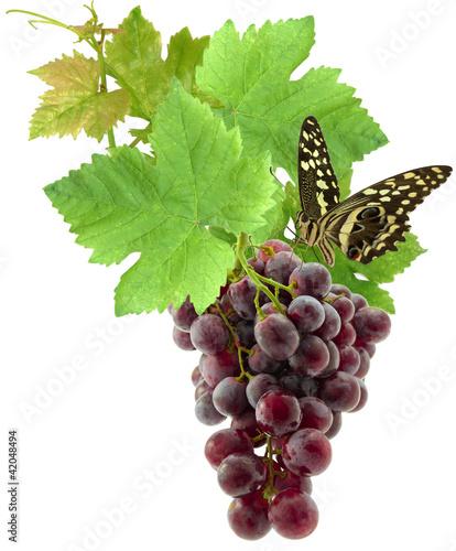 papillon sur grappe de raisin
