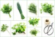 Set of Garden Herbs