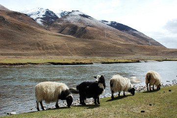 Landscape in the highland of Tibet