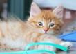 gattino rosso gioca con un cordino di plastica verde