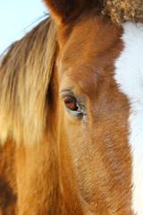 eye horse