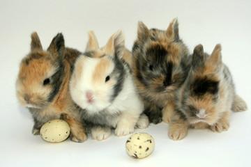 Vier Kaninchen