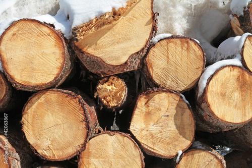Holzstämme im Winter