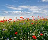 Fototapety Frühlingswiese mit Margeriten, Kornblumen und Klatschmohn
