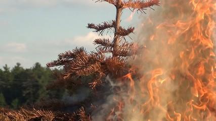 video weihnachtsbaum brennend I