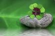 Wellness in der grünen Oase