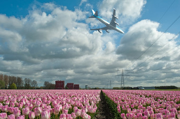 Plane flying over a field of tulips